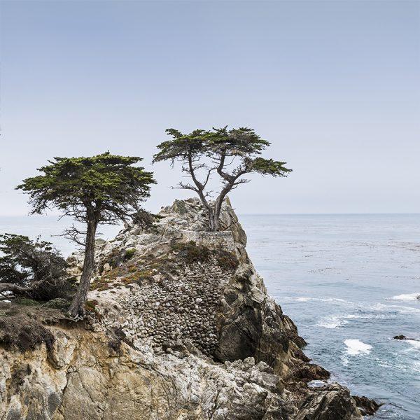 The Lone Cypress Pebble Beach