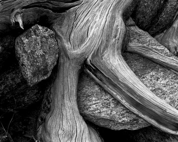 Mt. Lemmon Rocks and Roots