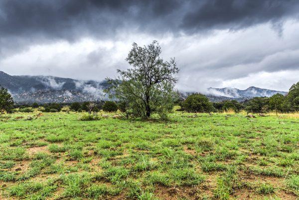 Pina Leño Mountains