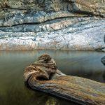 Reddington Canyon Creek